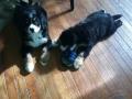 puppies_2013