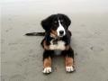 trinity_-beach